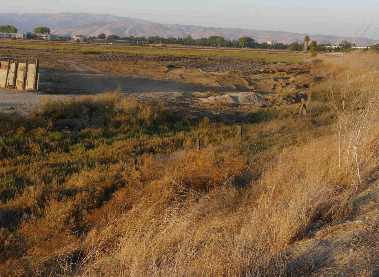 Federally protected wetlands in Newark where James Lucero dumped dirt and construction debris. Photo by Citizens Committee to Complete the Refuge via federal court filings.